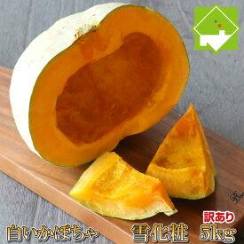 ハロウィン かぼちゃ 送料無料 北海道富良野産 白い南瓜 雪化粧 訳あり 5キロ 2玉から3玉入り 送料無料