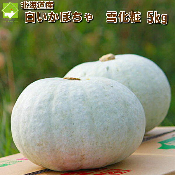 北海道富良野産 白い南瓜 雪化粧5kg【2−4玉入】 【送料無料】【10P03Dec16】