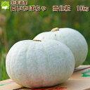 北海道富良野産 白い南瓜(かぼちゃ) 雪化粧(ゆきげしょう)10kg【4−8玉入】 送料無料