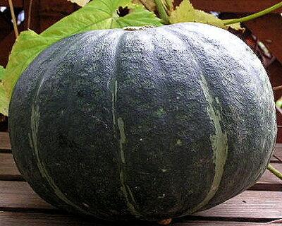 有機栽培かぼちゃ