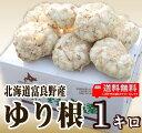 北海道富良野産 最高級 ゆり根 1kg 【送料無料】 【10P03Dec16】