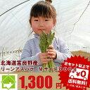 アスパラガス グリーン 最高級秀品  Mサイズ800g『生で食べれる』北海道富良野産 【ご予約販売】【10P03Dec16】