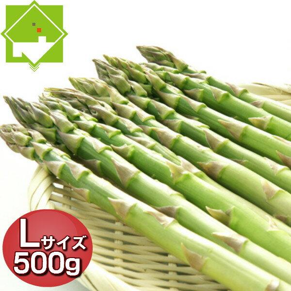 アスパラ グリーン Lサイズ 500g 北海道富良野産 ハウス栽培 【送料無料】別途送料が発生する地域あり