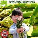 アスパラガス 生で食べれる 北海道 富良野産 グリーン SからLサイズ混み1kg 送料無料 別途送料加算される地域あります。