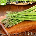 楽天スーパーSALE 半額 アスパラガス 生で食べれる 北海道富良野産 1.5kg入り 送料無料 別途送料のかかる地域あり