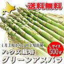 ハウス栽培 北海道富良野産 グリーンアスパラ Lサイズ 500g 【送料無料】【10P03Dec16】