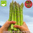 アスパラガス 北海道産 送料無料 ハウス栽培 富良野産 グリーンアスパラ 超極太 4Lサイズ 500g(約10本)