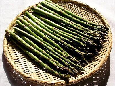 アスパラガス北海道富良野産グリーン秀品S〜Mサイズ500g送料無料朝もぎ生で食べられる別途送料加算される地域あり