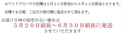 アスパラ北海道富良野産スイートアスパラ(SからLサイズ込)1kg送料無料【10P03Dec16】