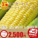 【生】で食べる!フルーツトウモロコシ 北海道富良野産  恵味【2Lサイズ12本入り】 送料無料【10P03Dec16】