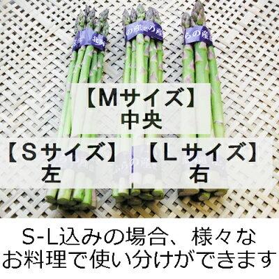 ご予約販売【深イイ話旨いいものSPL】で紹介された北海道富良野産グリーンアスパラ秀品(S〜Mサイズ500g)【合計500g】【10P03Dec16】