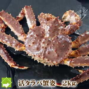 たらば蟹 オス 北海道産 特大 2kg(1尾) 送料無料 「ボイル・活 選択可能」