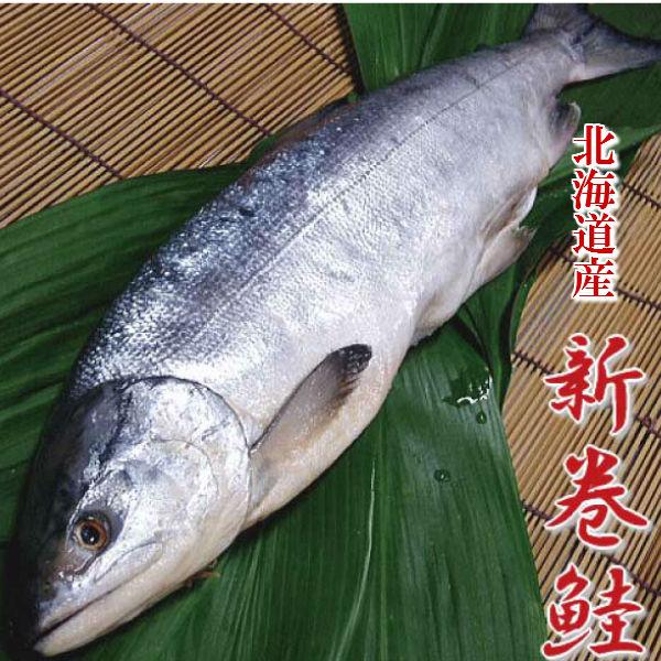 北海道産 新巻鮭 1匹 約1.5kg 送料無料