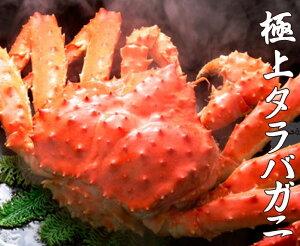 本たらば蟹(タラバガニ)オス 1.5kg前後 【ボイル急速冷凍】【10P03Dec16】