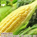 北海道富良野産 フルーツとうもころこし 恵味(めぐみ) Lサイズ 12本入り【送料無料】