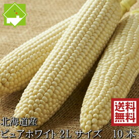 とうもろこし 生で食べれる白いトウモロコシ 北海道富良野産 ピュアホワイト 2Lサイズ 10本入 送料無料 別途送料が発生する地域あり