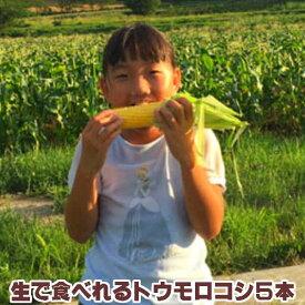 とうもろこし 【生】で食べれる!北海道富良野産 フルーツとうもころこし 恵味ゴールド 厳選 秀品2Lサイズ 5本入り 【送料無料】