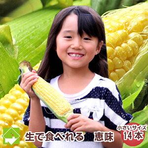 生で食べれるトウモロコシ 北海道富良野産 恵味(めぐみ) Lサイズ 14本入り