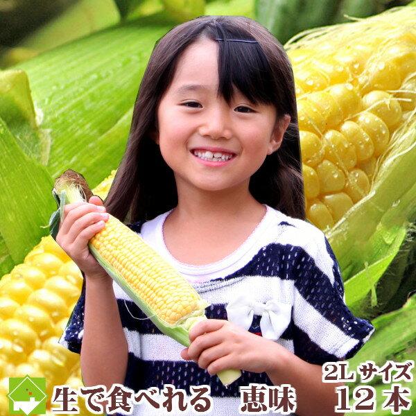 【平成30年発送】とうもろこし 北海道富良野産 生で食べれるトウモロコシ 恵味(めぐみ) 2Lサイズ 12本入り 【送料無料】【10P03Dec16】