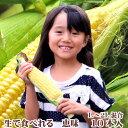 生で食べるフルーツトウモロコシ 北海道富良野産  恵味 Lから2Lサイズ混み 10本 送料無料 別途送料のかかる地域…