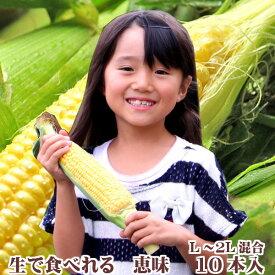 生で食べるフルーツトウモロコシ 北海道富良野産  恵味 Lから2Lサイズ混み 10本 送料無料 別途送料のかかる地域あり