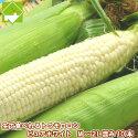 【幻の白いとうもろこし】北海道富良野産