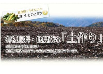 北海道富良野産2色のとうもろこしセットピュアホワイト4本・恵味4本合計8本送料無料【DEAL】