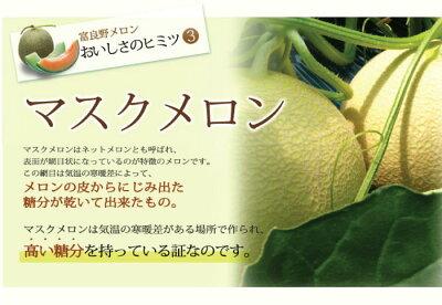 ふらのメロン超特大サイズ3Lサイズ2玉入り送料無料北海道ふらの産
