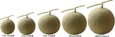 北海道富良野産富良野メロン(赤肉)8kg(4−8玉入り)【送料無料】【ギフト対応】【10P03Dec16】