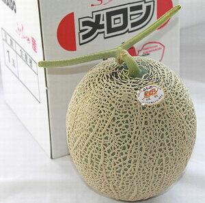 メロン 送料無料 北海道富良野産 赤肉メロン 1.5キロ以上 1玉