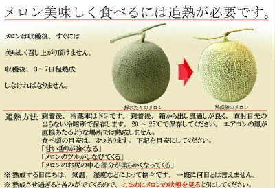 ふらのメロン赤肉1.2キロ以上1玉送料無料北海道富良野産