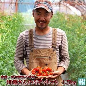 トマト 北海道 当麻産 のんの畑の ミディトマト 1.5kg