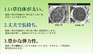 い草ラグ花ござカーペットラグ8畳国産『アシック』グリーン本間8畳(約382×382cm)