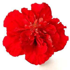 【母の日】【農家直送】夏の夜も咲き続けるロングライフ・ハイビスカス4号☆選べる2鉢セット!【花】【鉢植え】【送料無料】