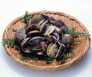 あさり殻付きL 500g(40〜50粒)(冷凍食品 椀種 鍋物 酒蒸し 業務用食材 貝 あさり アサリ 殻付)
