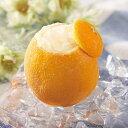 フレンズファクトリー)オレンジシャーベットラウンド1個(冷凍食品 アイスクリーム 洋菓子 まるごと フルーツ 果物 く…