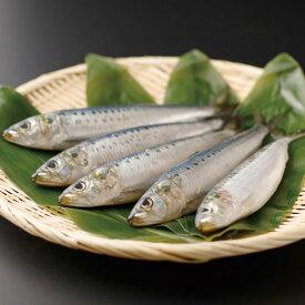 大トロいわし(北海道産) 1尾(150-170g)(冷凍食品 国産 マイワシ 魚 原材料 業務用切身)