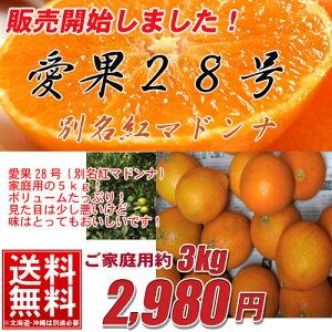 【送料無料】愛果28号(別名紅マドンナ) 家庭用たっぷり3kg期間限定/紅まどんな/愛媛/訳あり