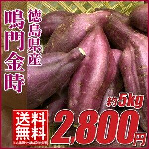 鳴門金時(新芋) 5キロ