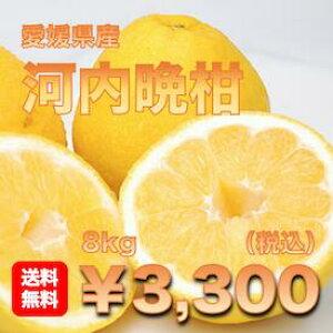 【送料無料】愛媛県産「河内晩柑」 約8キロ柑橘 【愛媛みかん/みかん】 【訳あり】