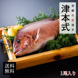 津本式 仕立て師:赤坂竜太郎 白寿真鯛重量約1.5~1.6kg 養殖 送料無料 愛媛県から発送津本式 血抜き 雑誌 鮮魚