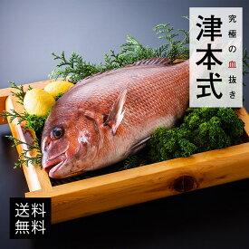 津本式 仕立て師:赤坂竜太郎 白寿真鯛重量約1.5~1.6kg 養殖  送料無料 愛媛県から発送 津本式 血抜き 雑誌 鮮魚