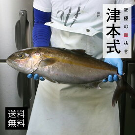津本式 仕立て師:阿部浩也 カンパチ 養殖 送料無料 兵庫県からの発送 津本式 血抜き 雑誌 鮮魚