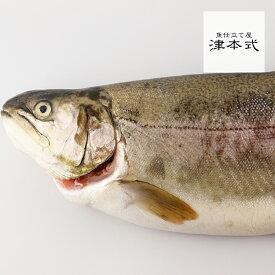 西米良サーモン キャンペーン!!津本光弘本人仕立て究極の血抜き西米良サーモン重量約2.0~2.5kg 養殖 宮崎県から発送