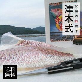 津本式 仕立て師:赤坂竜太郎 白寿真鯛重量約2.5kg×2尾入り 養殖 三枚下ろし 送料無料 愛媛県から発送 津本式 血抜き 雑誌 鮮魚