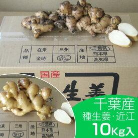 【種生姜】千葉県産 近江生姜(白)10kg【富里出荷】