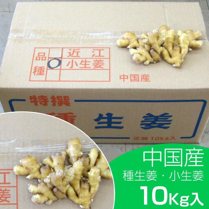 【種ショウガ】中国産 小生姜10kg【種子/種生姜/生姜/栽培/三州生姜/中太生姜】