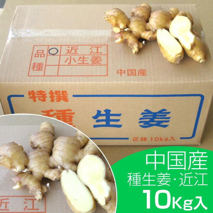 【種ショウガ】中国産 近江生姜(黄)10kg【種子/種生姜/生姜/栽培