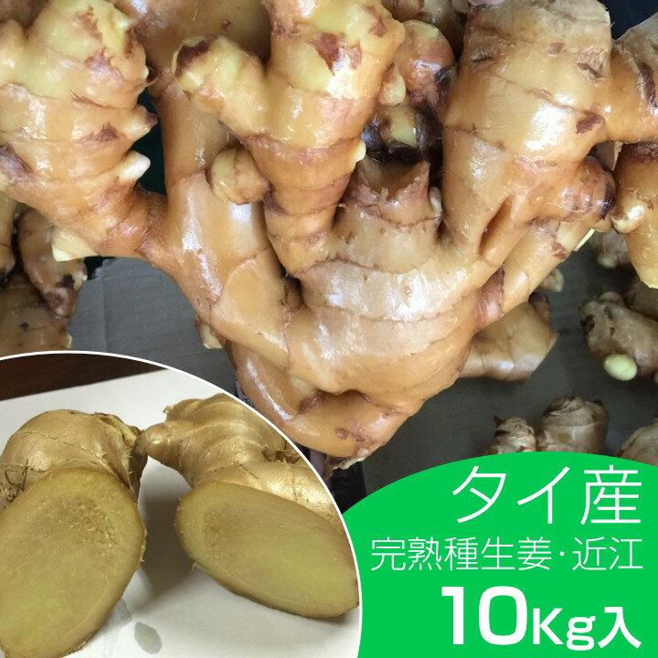 【種ショウガ】タイ産完熟種生姜10kg(近江生姜 白)【種生姜】【種子/種生姜/生姜/栽培】