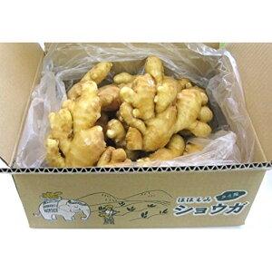 食用 タイ産ほほえみショウガ 3kg(近江生姜 白) 富里出荷